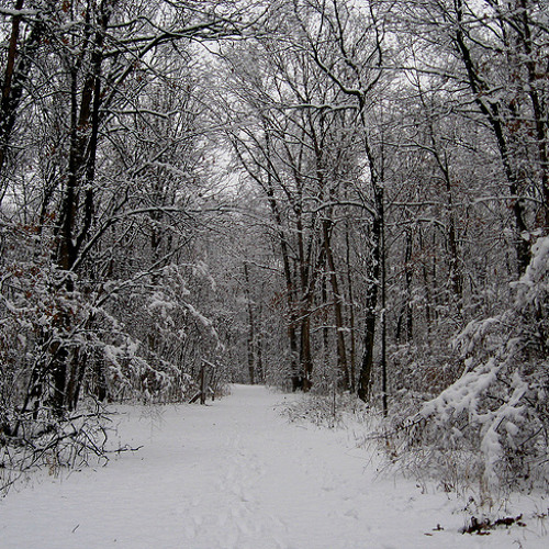 STOPPING BY WOODS ON A SNOWY EVENING by Robert FROST read by MAN POEMS