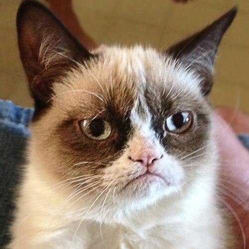 Swen (Dzoncy) strOOp - Final Cat (Goa master)