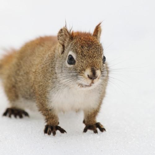 Squirrel Hunters (variation)