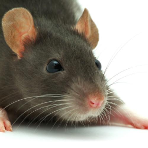 Receptor - Little Rat