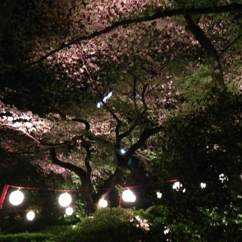 月光夜桜(moonlight YOZAKURA-Polar Star 3013 RoboRemix)