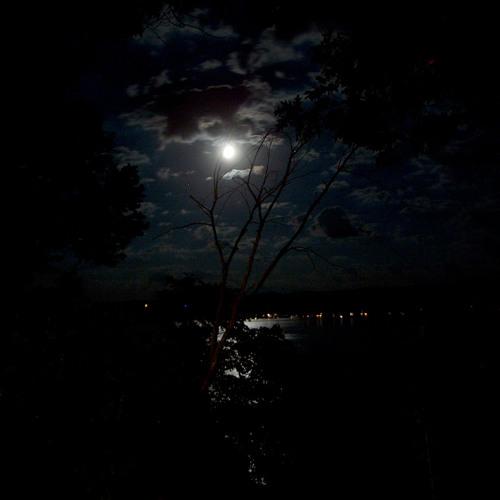V.I.O - Nocturnal