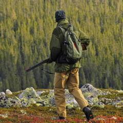 Statskog - jakt