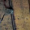 06. Clock Town Titanium