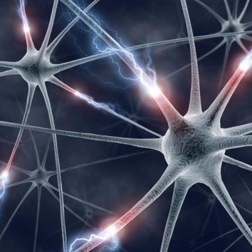 Neuronica (Rough)