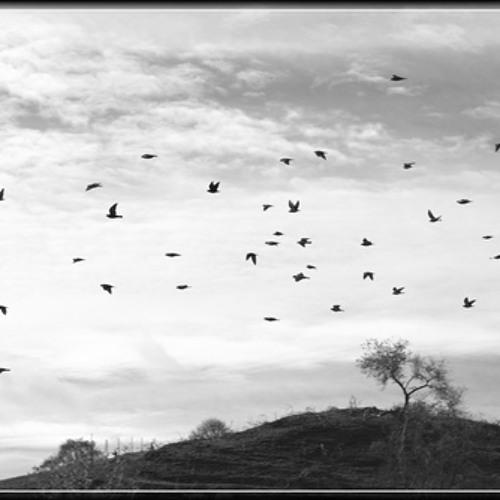 Scores of Birds