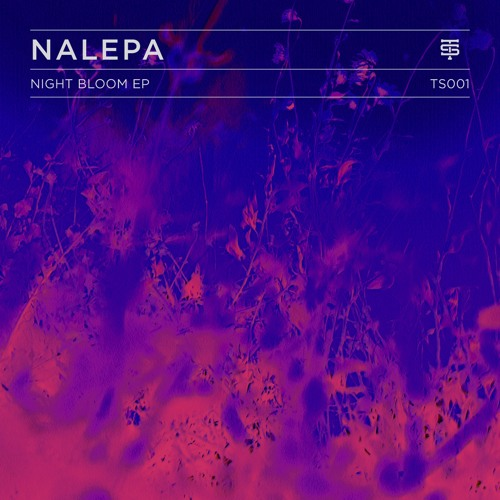 Night Bloom EP
