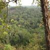 Laos Jungle Ambience at Dusk, Xe Pian National Park, Laos