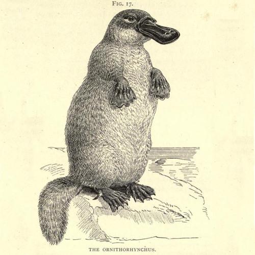 Platypus - Emission 0