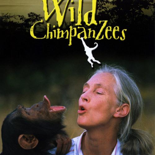 JANE GOODALL'S WILD CHIMPANZEES: Jane's Theme (J Clegg arr by Bhatia)