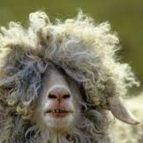 12Gauge vs Nicksn - Sheep Tactics   OUT NOW!!