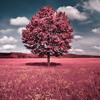 Neon Hitch - Pink Fields (dubstep remix by XTache)