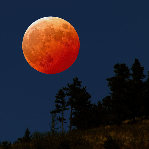 Starion - Luna Rossa