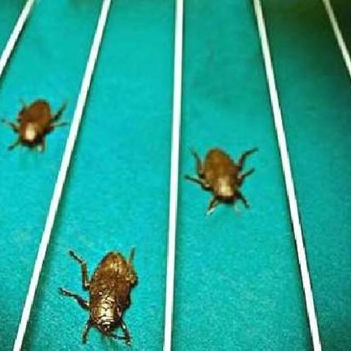 Marginal - Cockroach Races - Dub