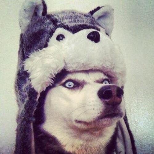 Husky (Rough Demo)