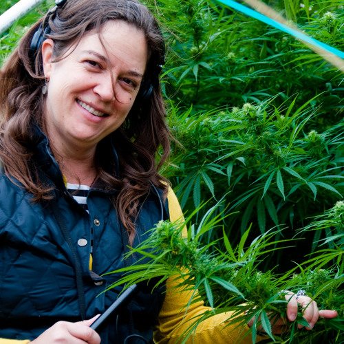 Garberville in Southern Humboldt County: A Town That Pot Built