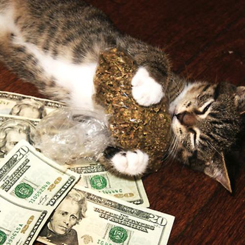 Pussy money wwed