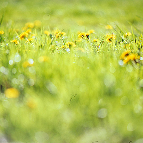 Sommerliegewiese