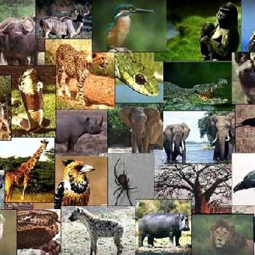 تتر برنامج عالم الحيوان