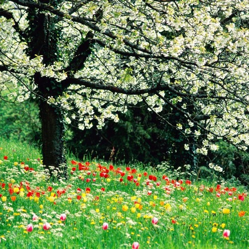Primavera (Beats For Sale)