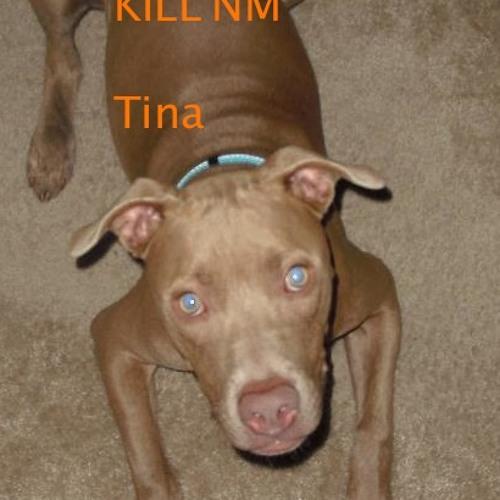 Kill'NM - Tina (teaser)