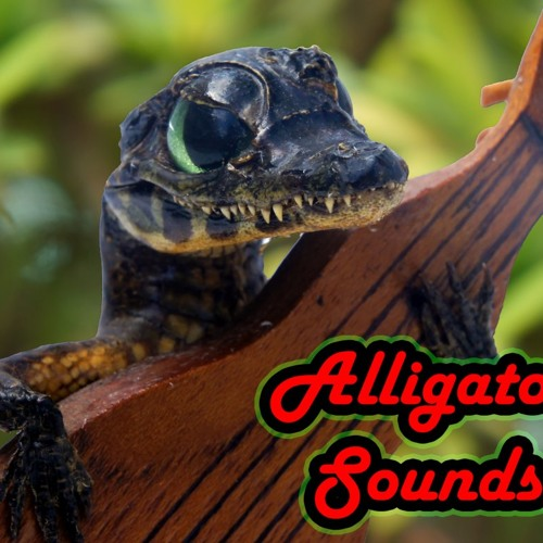 Samadhi Vibration by Alligator Sounds [ft. Sandro Shankara (Sitar) & Antonio Arvind (Hang Drum)]