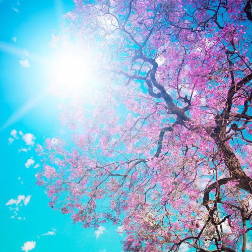 My Springtime Lament