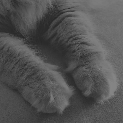 cashmerecat