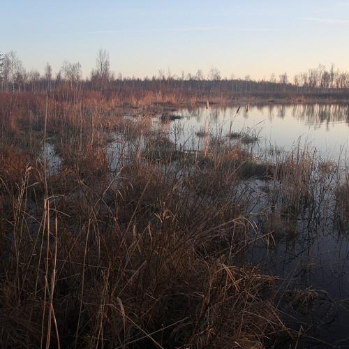 Sunrise in swamp