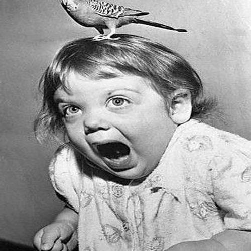 Insane in the Bird Machine (NIXd Mashup)