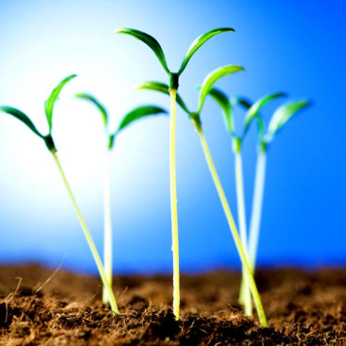 seedlings - gray vitron
