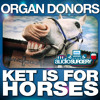 Organ Donors 'Ket Is For Horses'