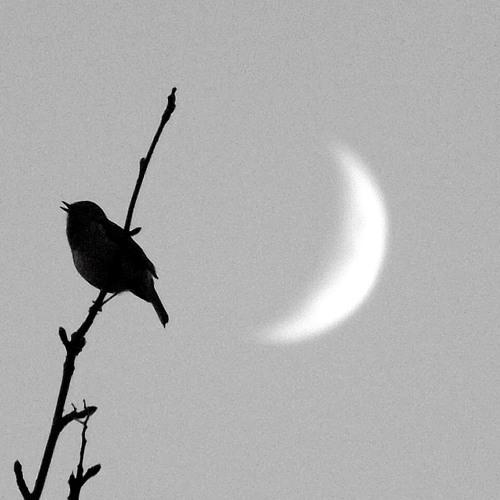 The Birds' Song (Demo)