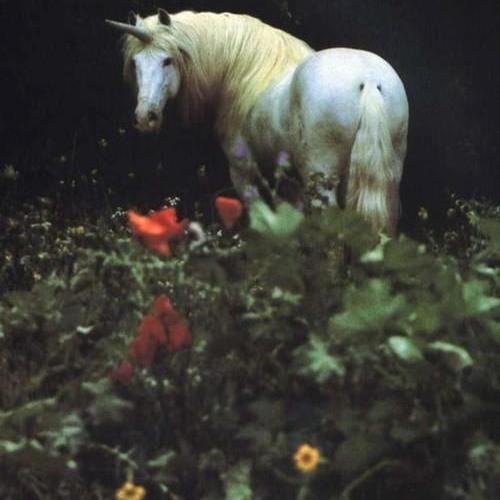 Unicorn  ( light edit )