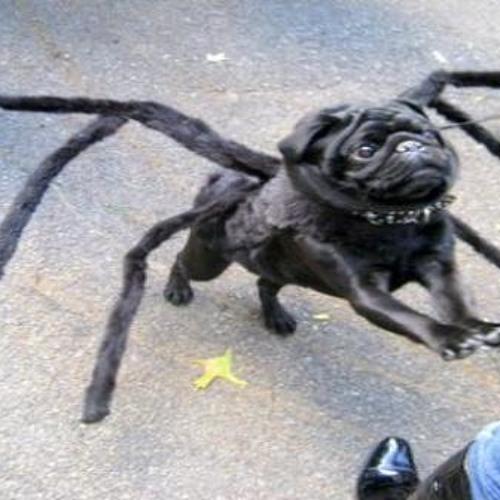 Jakub23 & Scamp-Arachnid Doglord (clip)