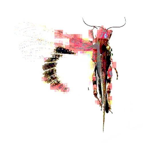 Caeliferan Plague(IV)