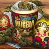 DJ P Exclusivez - Trappin' Outta Russia Intro