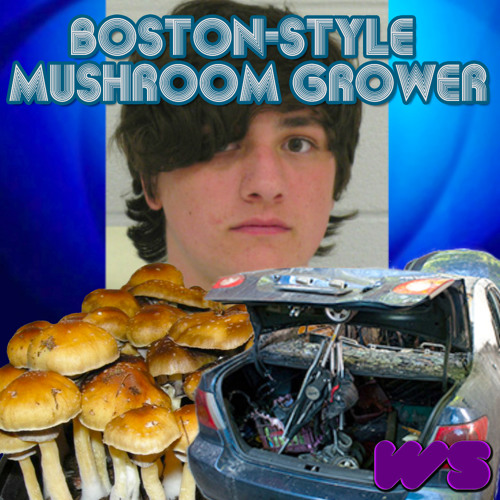 Wizard Status - Boston-Style Mushroom Grower