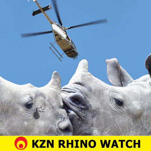 KZN Rhino Watch update: 15 May 2013
