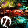 Herr Fuchs & Frau Elster | Mitternacht im Garten | Chalet Berlin (05/2013)