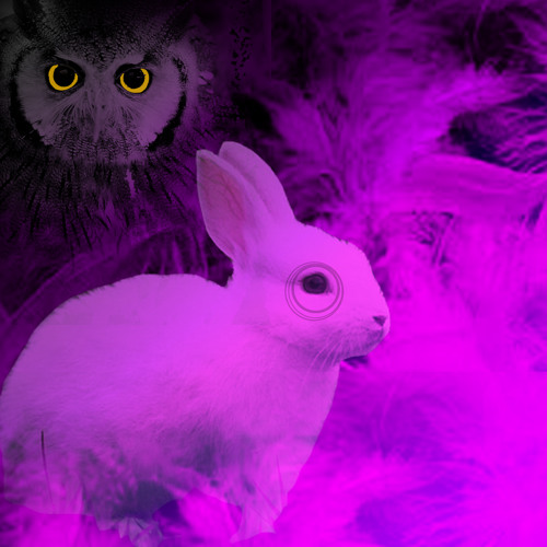 Boge & Scandal - Bunny Rabbit (Radio Edit) FREE DOWNLOAD