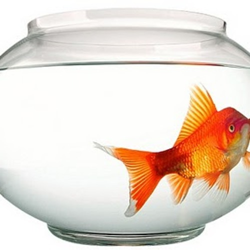 Adventures of a Goldfish 2013-05-15