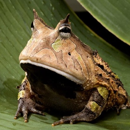 Frog know
