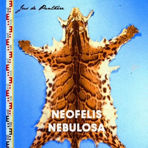 Neofelis Nebulosa