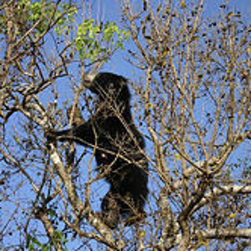 DeaneTR Gary Lawless - Treat Each Bear