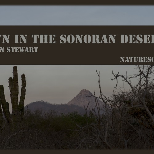 Dawn in the Sonoran Desert