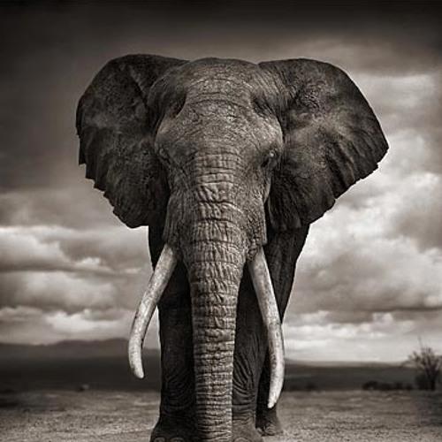 Der Elefant (Vinyl only)