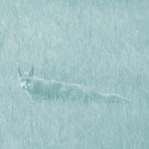 un renard bleu (unreleased demo)