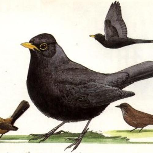 092A 130520 0407 Bird Chatter 5 am.... :)