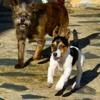 III Festival de gossos d'elit a Platja d'Aro